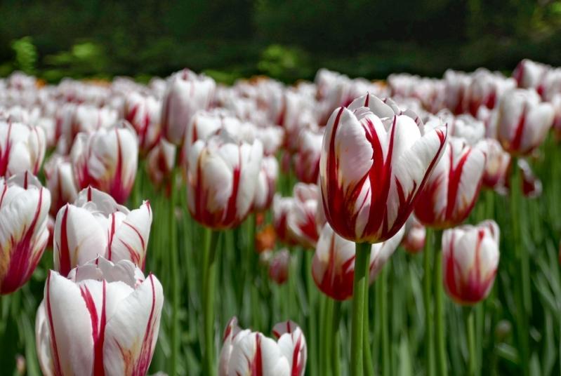 Canadian War Museum & Tulip Tour